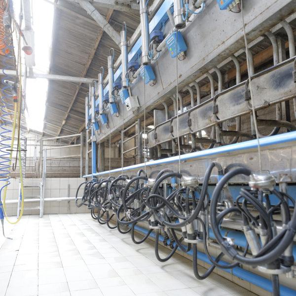 Création d'une unité logistique et de transformation issue de la filière bovine